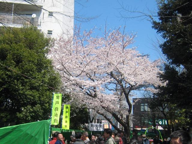 2012年4月 せいせき桜まつり