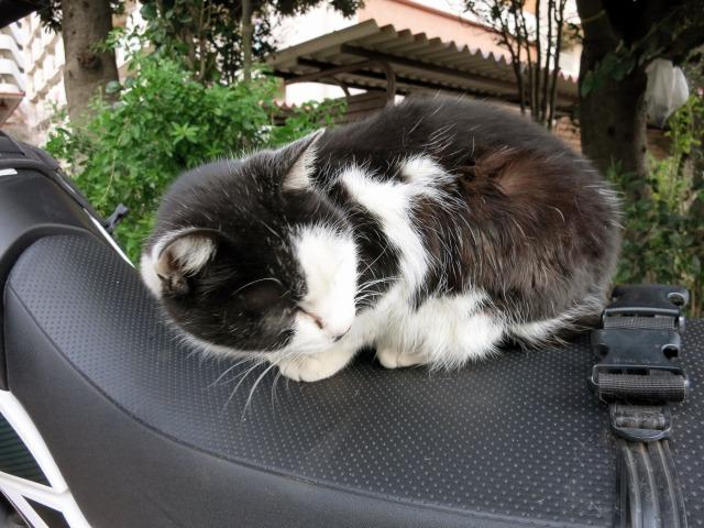 公園の周りは猫も多い