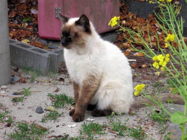 浜岡砂丘駐車場の猫