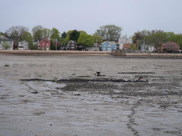 干潟で貝を掘ってる人たち