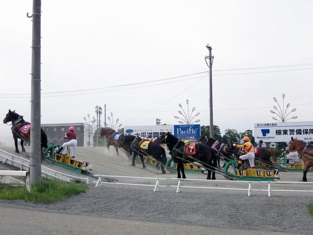 帯広競馬場でばんえい競馬を楽しむ